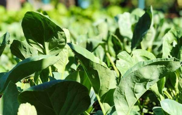 Movenpick Resort & Spa Karon Beach Phuket Unveils Organic Vegetable and Herb Garden
