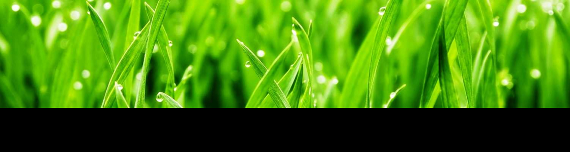 Designscapes plants trading LLC. Cover Image
