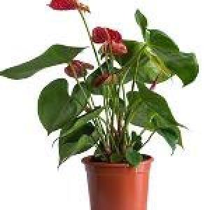 Designscapes plants trading LLC.Profile Picture