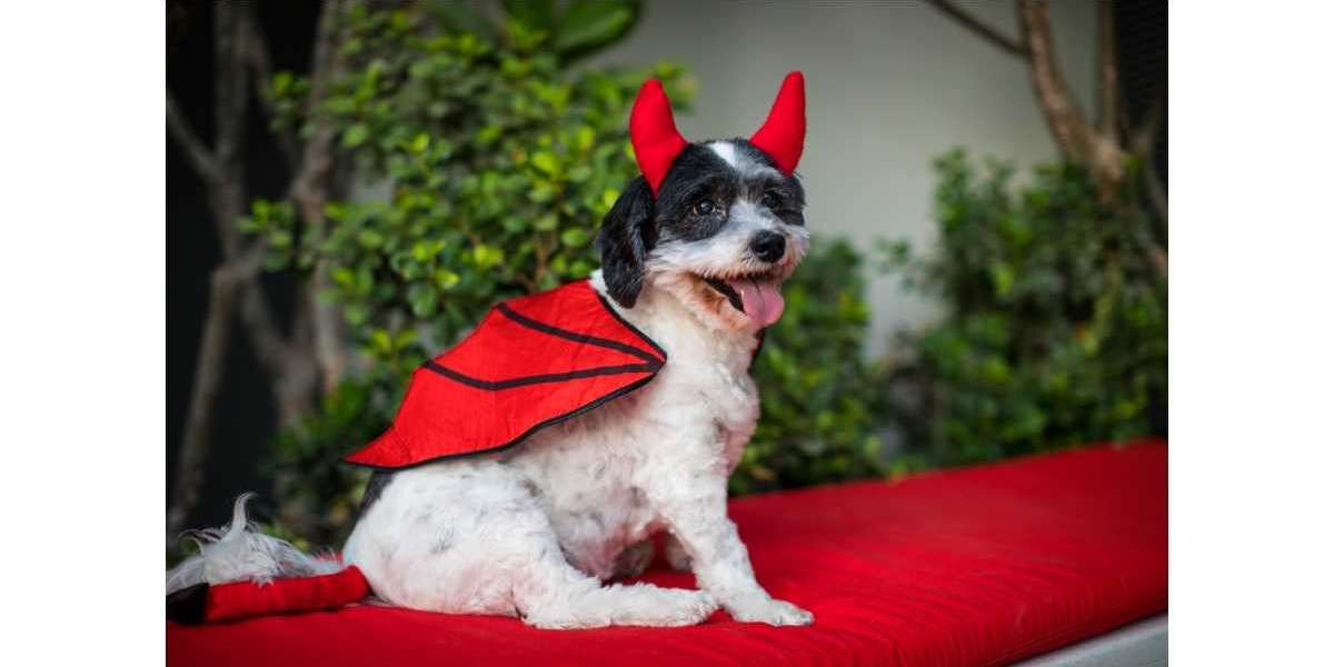 Celebrate Howl-o-ween with your Doggies at Radisson RED!