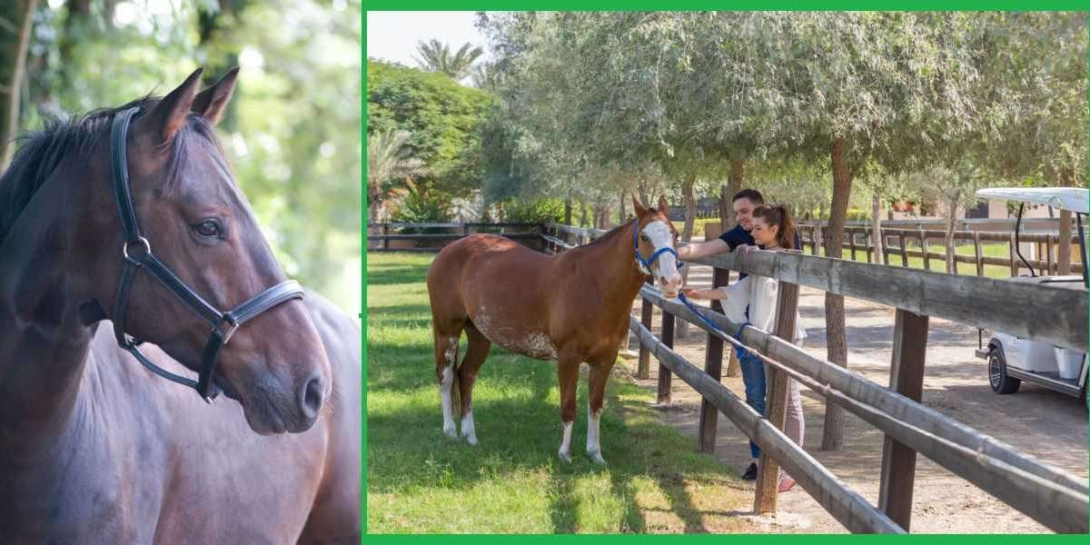 A Therapeutic Day with Horses at Meliã Desert Palm Dubai